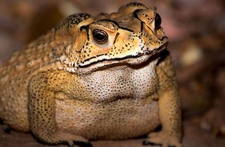 Bufonophobia: The Fear of Toads