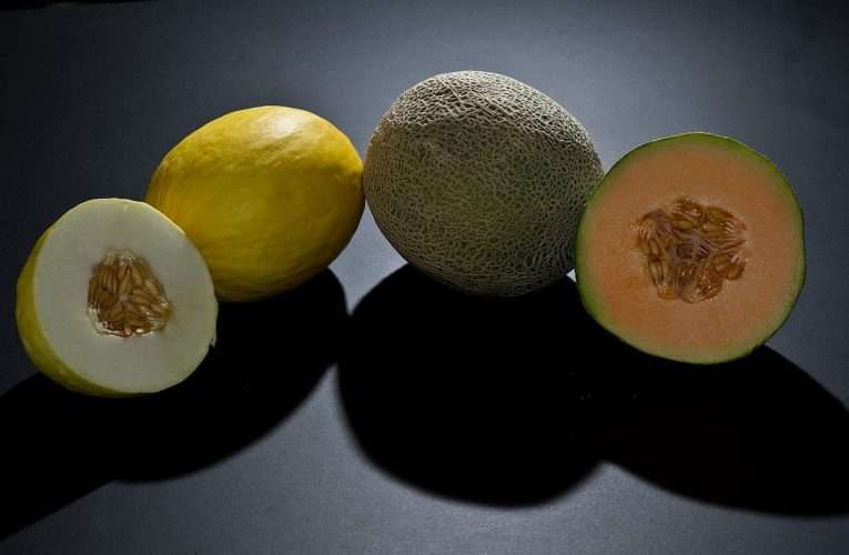 15 Kinds of Melons With Photo